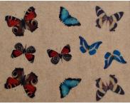 """Фотодизайн ногтей """"Цветные бабочки"""", Р002"""